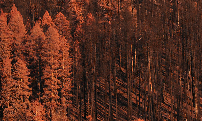 Photograph after the Los Alamos Fire 2011 - Tom Suhler